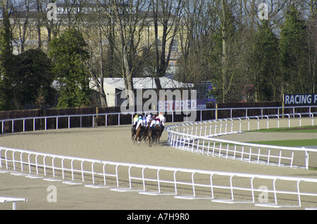 horse racing on the all weather track at Kempton Park - Stock Photo