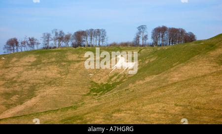 White Horse Hill figure on cherhill down Wiltshire UK - Stock Photo