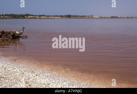 Lac Rose or Lac Retba pink lake rich in salt and mined for salt by local people Senegal - Stock Photo