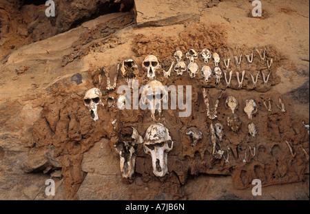 Hunter's shrine, monkey skulls, Teli village, Dogon Country, Mali - Stock Photo