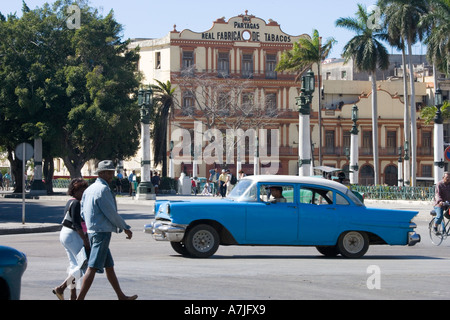 An American Fifties car passes the Partagas Cigar Factory in Havana Cuba - Stock Photo