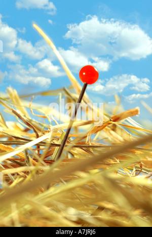 to look for a needle in a haystack Eine Nadel im Heuhaufen suchen finden