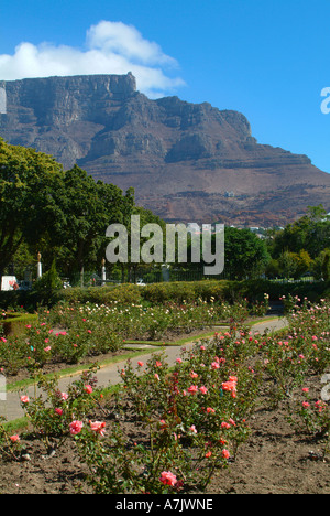 View of Table Mountain from Companys Garden Central Cape Town South Africa - Stock Photo
