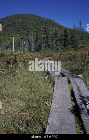 North America, US, NH, A tamarack bog bridge on the Lonesome Lake trail.