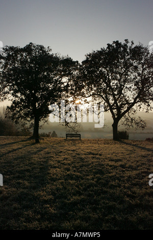The early morning winter sun shines through two trees in Somerset, December 2005 - Stock Photo