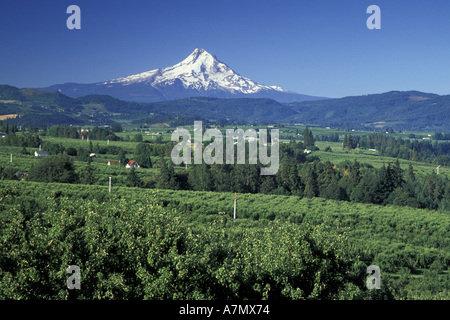 NA, USA, Oregon, near Hood River Mt. Hood with wiew of orchards in the Hood River Valley; summer - Stock Photo
