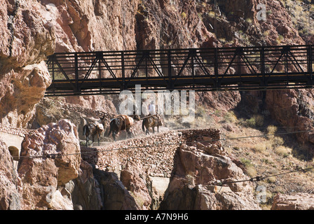 A cowboy leads his mules towards the Black Bridge over the Colorado River to head back up the South Kaibab Trail - Stock Photo