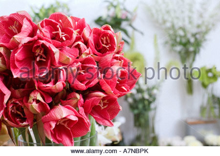 Bunch of red flowers in vase in flower shop close up focus on foreground - Stock Photo