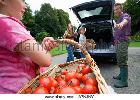 Two generation family loading car with fresh vegetables girl 8 10 carrying basket full of tomatoes smiling side - Stock Photo