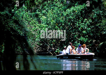 Dominica, Northern coast, West part, Portsmouth, sailing up the Indian river through the mangrove swamp on small - Stock Photo