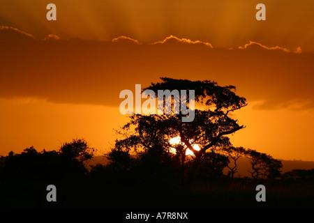 A thorntree silhouetted against the setting sun Tembe Elephant Park Maputaland Kwazulu Natal South Africa - Stock Photo