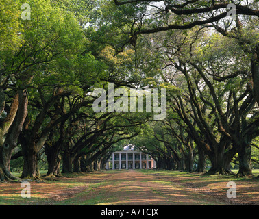 Trees along dirt road leading towards country house, New Orleans, Louisiana, USA - Stock Photo