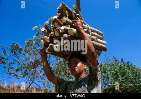 Young man carrying firewood's on his head, Nicaragua - Stock Photo