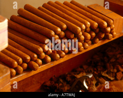 Stack of cigars on wooden slab, Panama - Stock Photo