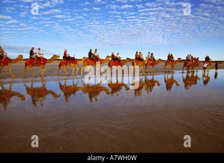 Camel caravan, Cable beach, Broome, West Australia, Australia