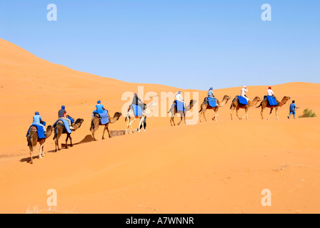 Group of tourists rides on camels one after another over a sanddune Erg Chebbi Merzouga Morocco - Stock Photo