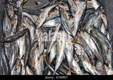 Seeling fish, Funchal, Madeira, Portugal - Stock Photo