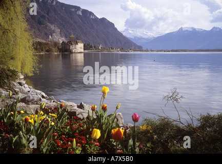 Tulips on the banks of Lake Geneva with Chateau de Chillon and the cloud shrouded peaks of the Dents du Midi in - Stock Photo