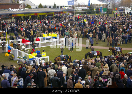 Horses and jockies are warming up and showing  to crowds before the horse races in the parade ring cheltenham gold - Stock Photo