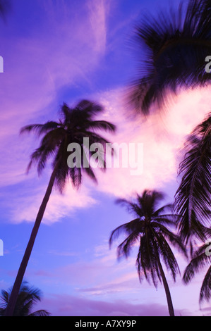 CAYMAN ISLANDS, CAYMAN BRAC, West End: Sunset with Palms - Stock Photo