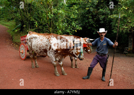 Costa Rica, La Paz Waterfall, coffee ox cart with oxen and driver - Stock Photo
