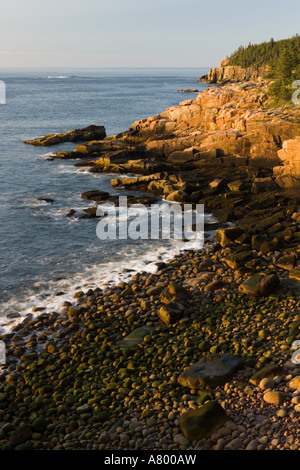Early morning on the pink granite ledges of the rocky coast in Maine's Acadia National Park. Otter Cliffs are in - Stock Photo