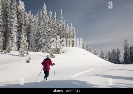 WA, Mt. Rainier NP, Barn Flats, Cross country skiing after winter snowstorm - Stock Photo