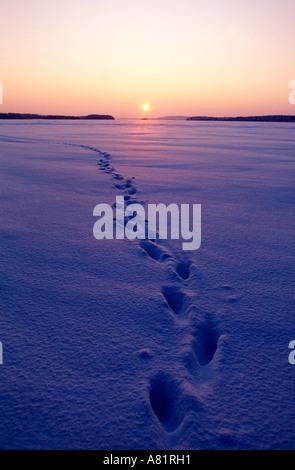 Finland, Karelia, Pielinen frozen lake - Stock Photo