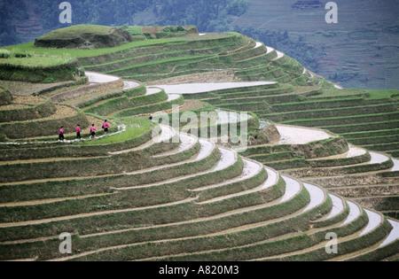 China, Guangxi province, Longsheng, Dragon's Backbone rice terraces. - Stock Photo