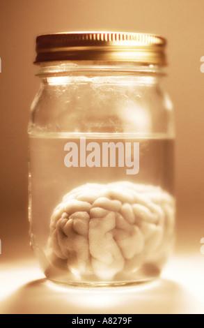 brain in jar - Stock Photo