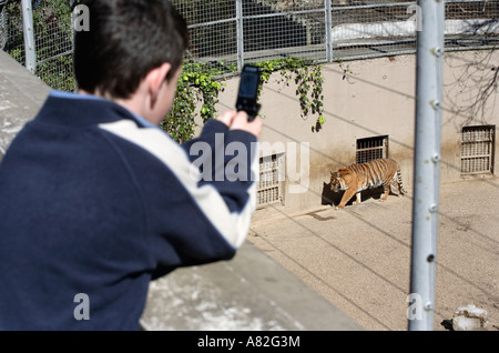 A young visitor takes a photograph of a tiger on his mobile phone at Dudley Zoo in the West Midlands, UK - Stock Photo
