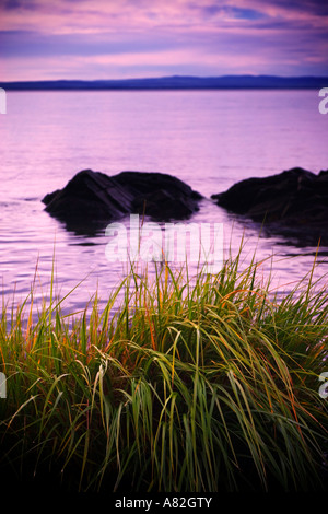 sunrise on seaweed on st lawrence river at L ile aux coudres in Charlevoix quebec canada - Stock Photo