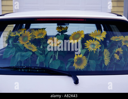 Arrangement of sunflowers displayed in back window of the car Southampton Long Island New York State USA - Stock Photo