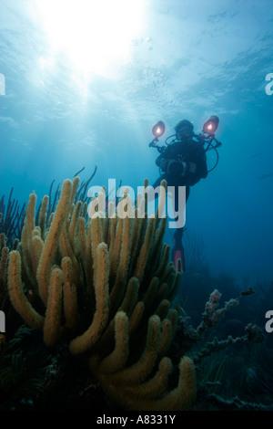 Underwater photographer hovers over soft coral, Florida Keys National Marine Sanctuary, Florida - Stock Photo