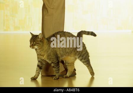 how do cats get fip