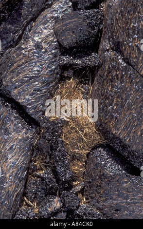 Pahoehoe lava and Pele s Hair strands of volcanic glass from Pu u O o eruption Hawaii Volcanoes National Park - Stock Photo