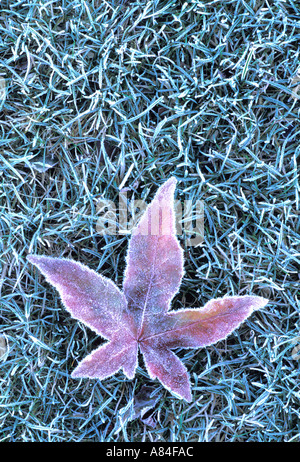 Frosted leaf on grass Langas River Front Park Everett Washington - Stock Photo