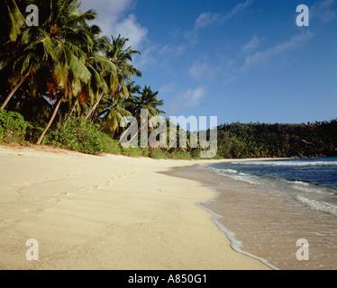 Seychelles. Mahé.Tropical beach with coconut palm trees. - Stock Photo