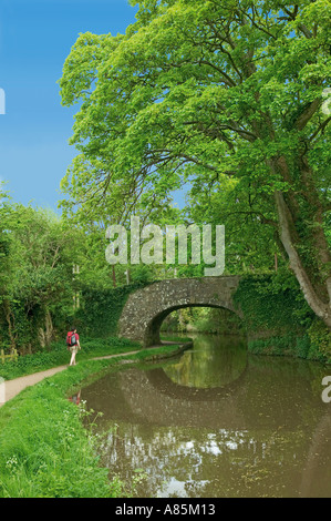 Female hiker walking on the towpath Brecon and Monmouth canal Gilwern South Wales UK - Stock Photo