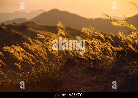Sunset over wild grasses- Tai Mo Shan peak Hong Kong - Stock Photo
