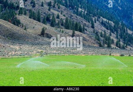 Irrigation in arid climate South Okanagan Similkameen region British Columbia Canada - Stock Photo