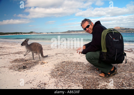 Tourist with kangaroo on the beach, Lucky Bay, Cape Le Grand National Park, Esperance, Western Australia - Stock Photo