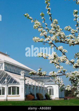 Temperate House and Spring Blossom Kew Gardens London England Great Britain - Stock Photo
