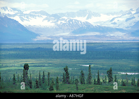 View from Denali Highway in Alaska USA June Open Black Spruce Picea mariana forest - Stock Photo