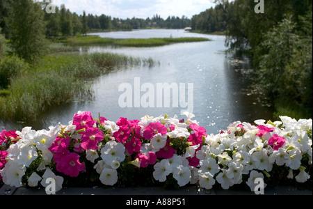 Group of petunias blooming at bridge parapet , Finland - Stock Photo
