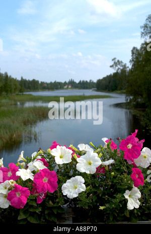 White and purple petunias blooming at bridge parapet , Finland - Stock Photo