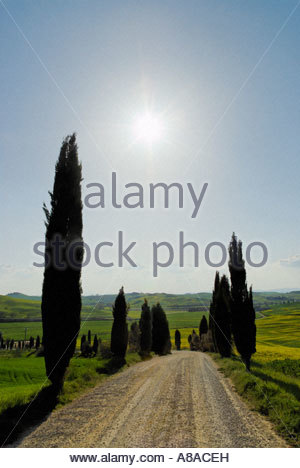tree lined 'gravel road' at Le Crete near Siena - Stock Photo