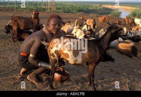 Karo girl milking goats , Kolcho , South Omo valley , Ethiopia - Stock Photo