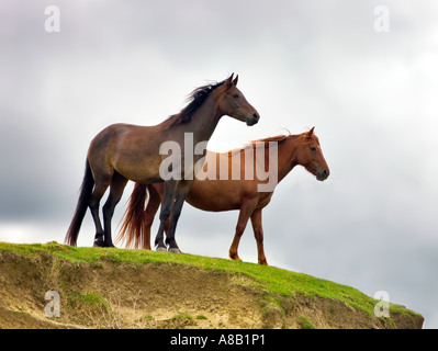 Two wild horses looking out from hilltop - Stock Photo