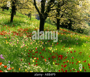 DE - BADEN WUERTTEMBERG:  Springtime on Mainau Island - Stock Photo